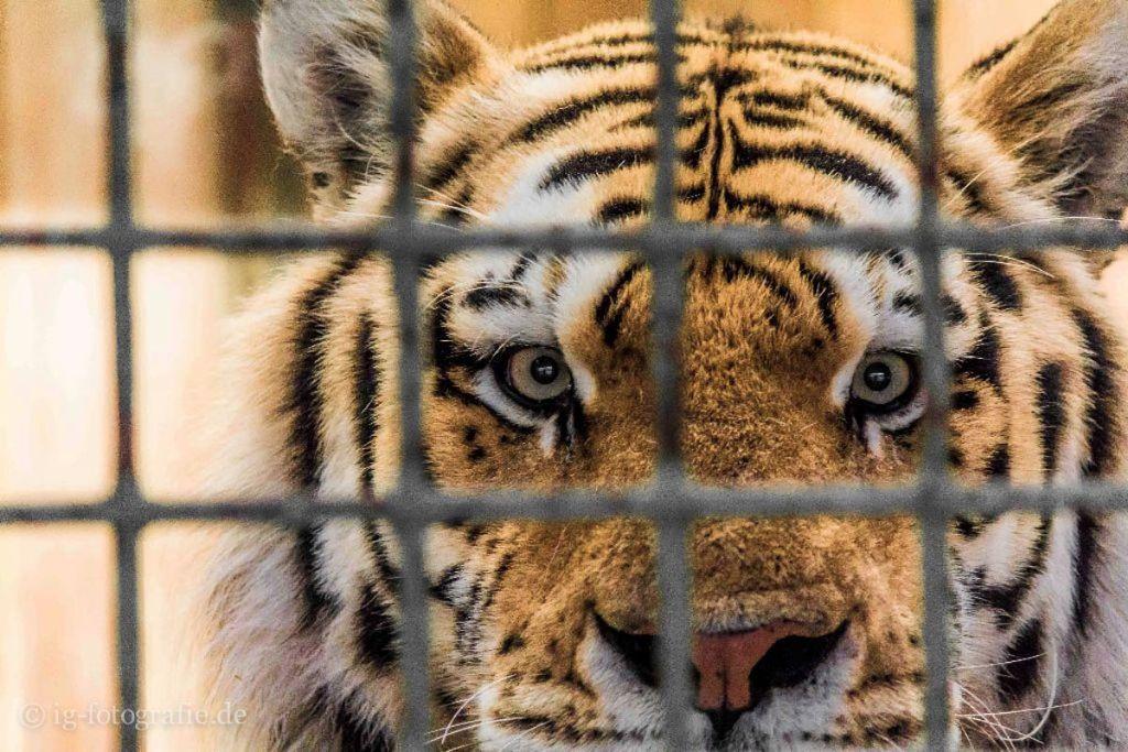 Tierpark Zoo Berlin: Fotolocations, Foto-Spots und Foto-Orte in Berlin