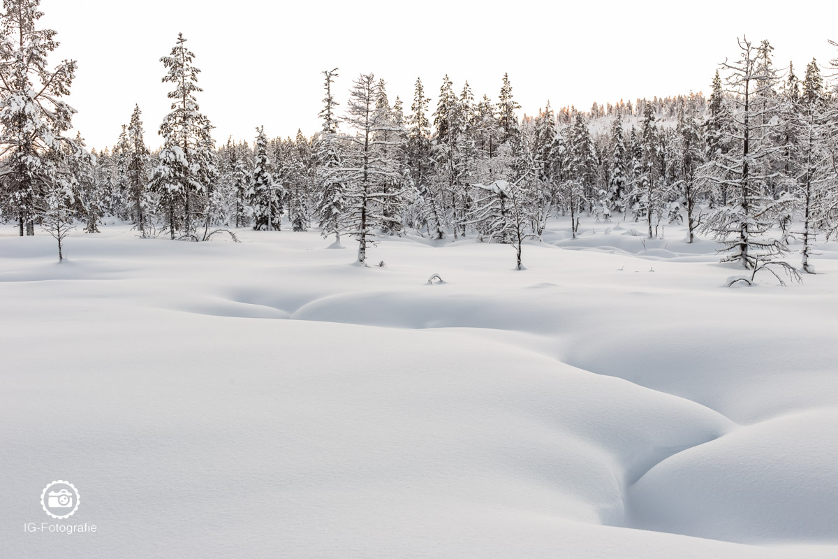 schweden-lappland-polarlicht-reise-66